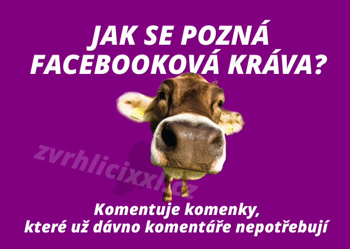 Krava,facebook,holky